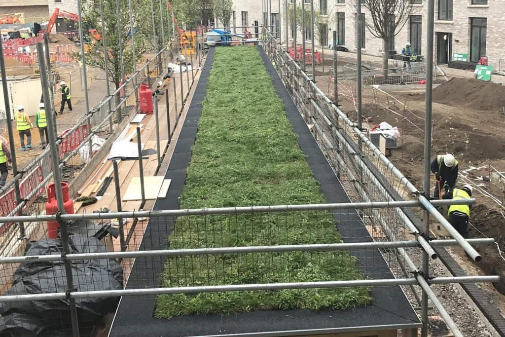 green roofing  Just installed