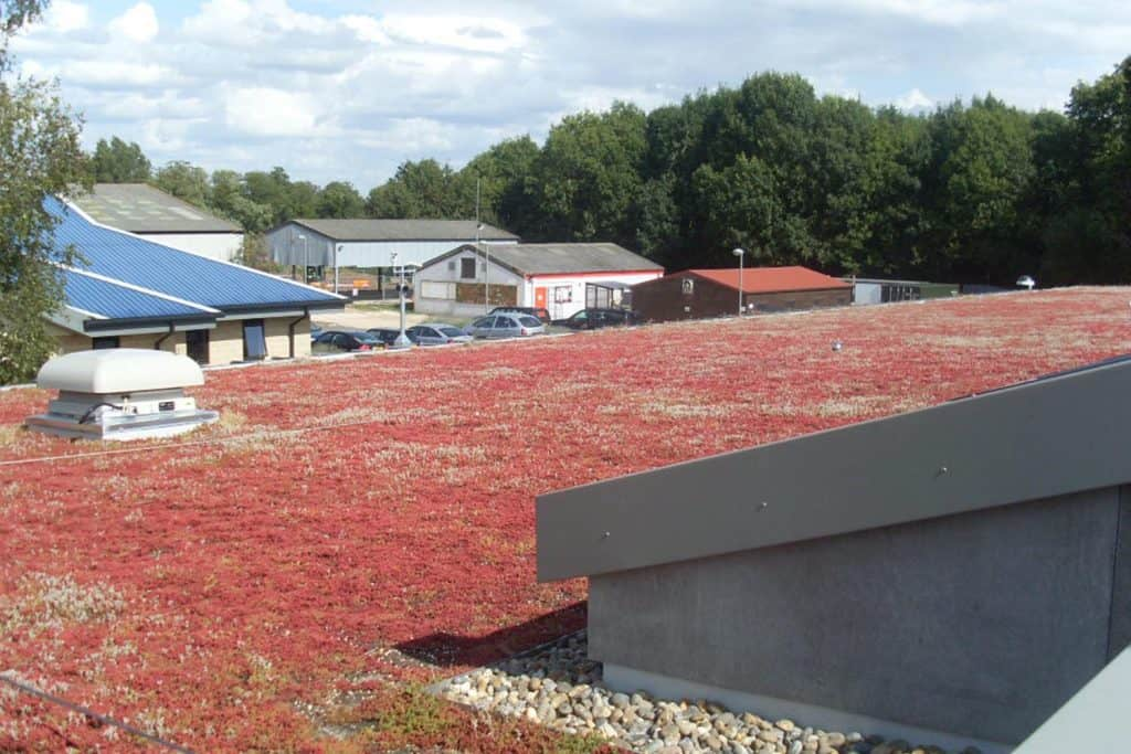 green roofing  Autmun Winter